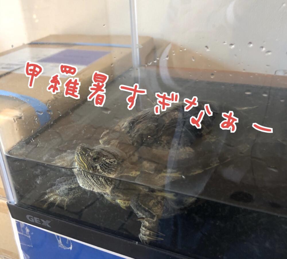 青森店ブログ